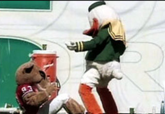 oregon ducks mascot  fight